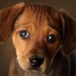Un matrimonio e una ciotola per cani