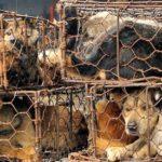 La Cina ha vietato il consumo di carni di cani