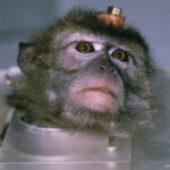 Non si inasprisca la vivisezione, partecipa qui