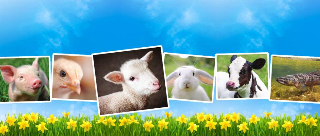 Sono tutti agnelli